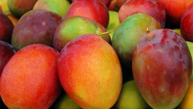 Colourful, juicy mangoes from South Africa
